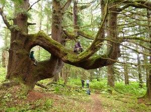 logging timber in northwest territories